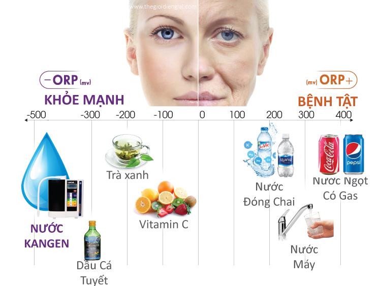 Nước Kangen có khả năng chống oxi hóa mạnh mẽ hơn hẳn, trong khi hầu hết các loại nước trên thị trường: nước đóng chai, nước máy, nước ngọt có gas, bia, rượu đều bị oxi hóa