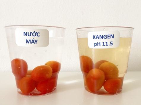 Đổ nước Kangen pH11.5 và nước máy vào 2 ly chứa cà chua, ngâm 5 phút. Ly nước Kangen pH11.5 (bên phải) đã bóc tách được thuốc trừ sâu, chất bảo quản trên cà chua, nước ngâm cà chua có màu vàng đậm. Còn ly nước máy (bên trái) thì không hề đổi màu