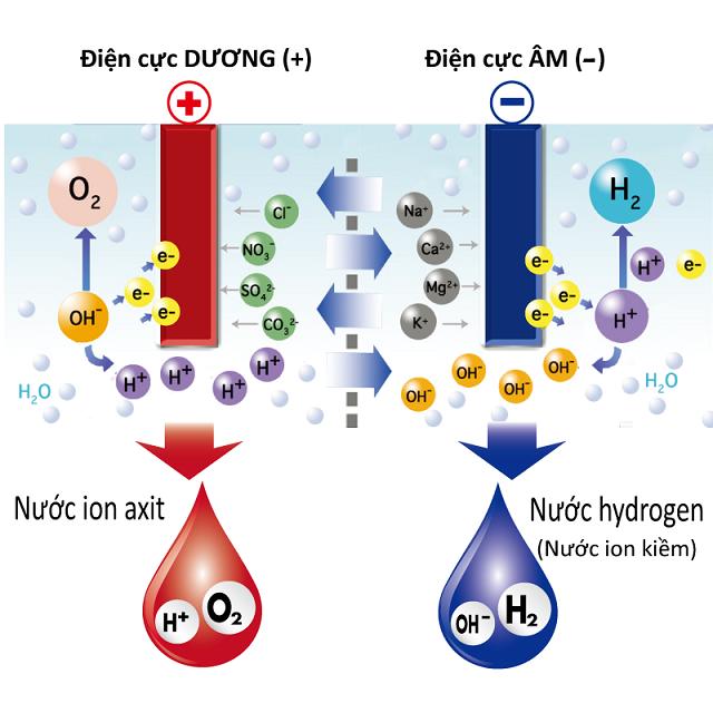 Nước ion kiềm (nước hydrogen) với 4 đặc tính ưu việt: giàu hydrogen, giàu vi khoáng, tính kiềm tự nhiên và cấu trúc siêu nhỏ