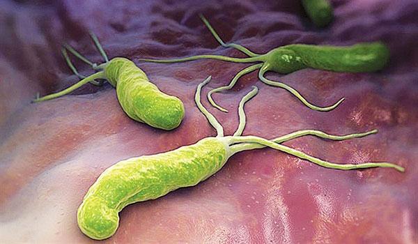 Nhận dạng các loại vi khuẩn gây bệnh đường tiêu hóa