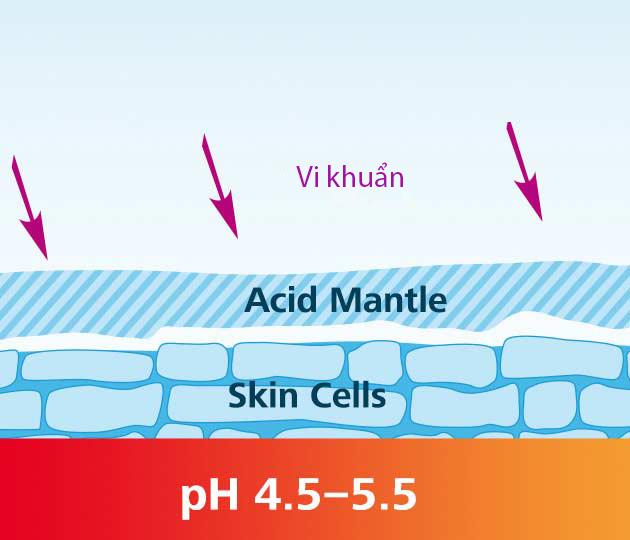 Màng axit bảo vệ da – acid mantle giúp hạn chế sự xâm nhập và tấn công của vi khuẩn vào cơ thể