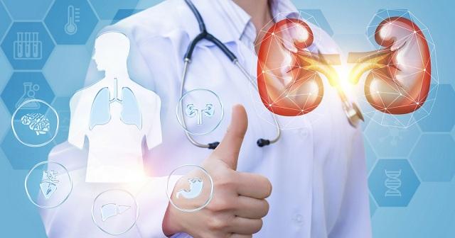 Bạn có biết, tuổi thọ con người phụ thuộc vào sức khỏe của thận?