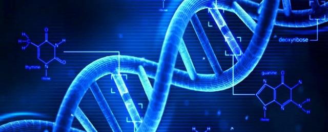 Chìa khóa của quá trình lão hóa chính là Telomere – đây là các đoạn ADN ngắn được tìm thấy ở các đầu của mỗi nhiễm sắc thể, khi số lượng Telomere còn nhiều, tức là các tế bào vẫn còn trẻ
