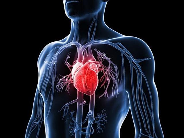 Hệ tim mạch gồm tim, máu và các mạch máu