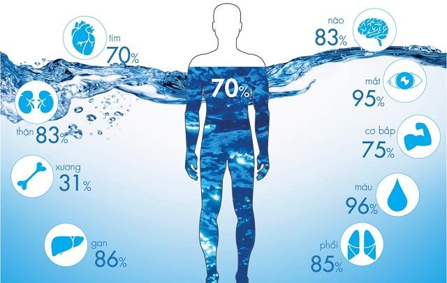 Nếu đóng vai trò đặc biệt quan trọng trong cơ thể, nếu mất đi 1% lượng nước thì hiệu suất làm việc giảm đi 10%