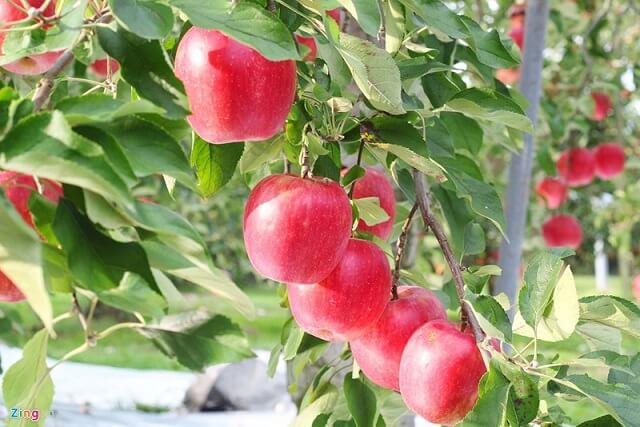 Nho, nghệ và táo giúp tiêu diệt tế bào ung thư tuyến tiền liệt 3