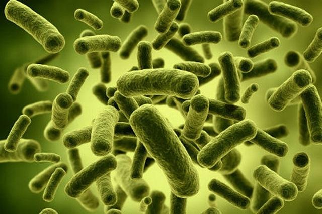 Những vi khuẩn nào thường gặp gây ngộ độc thực phẩm?