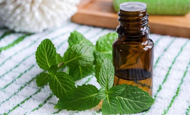 Đặc tính làm mát của tinh dầu húng quế giúp làm giảm cơn đau nhanh chóng