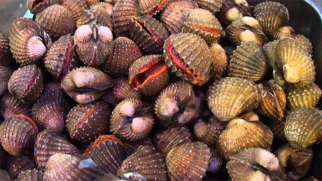 Một số loại ốc, sò cũng có khả năng gây dị ứng hoặc ngộ độc