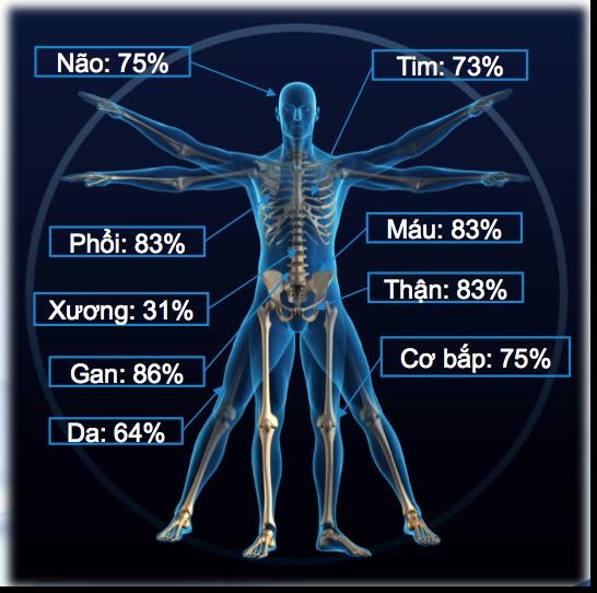 tỷ lệ phần trăm nước trong cơ thể người