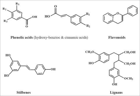 cấu trúc hóa học của Polyphenol