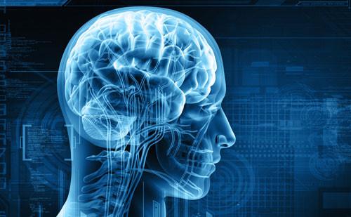 nước đóng vai trò quan trọng trong việc cấu thành nên bộ não
